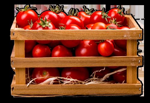 gajbica-paradajza-vodena-bašta