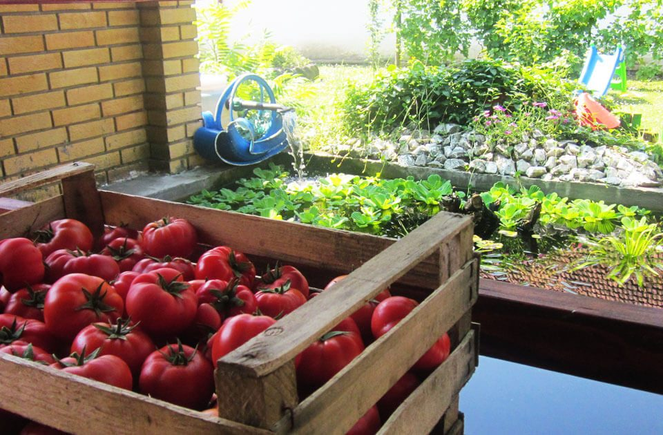 uštedite-vreme-i-novac-dok-uzgajate-povrće